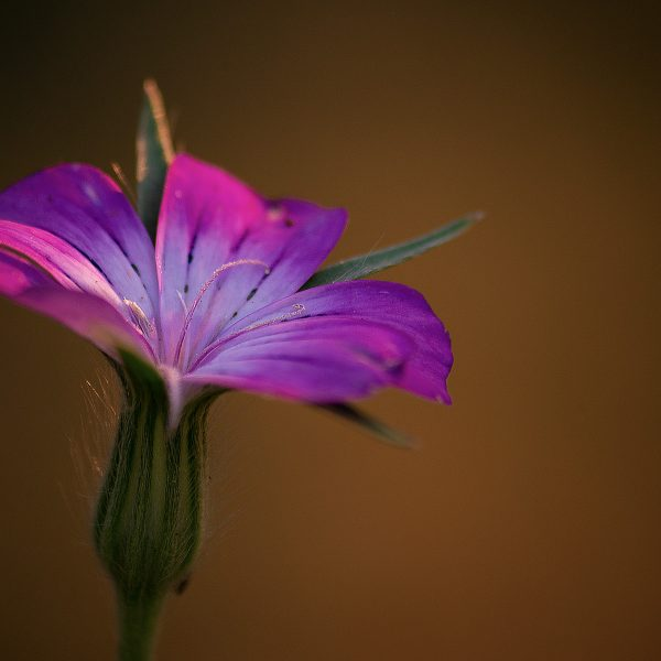 Blüten, Pflanzen, Blumen Vol. 2